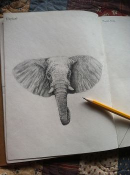 Elephant Sketch by ShaneWhiteNoise