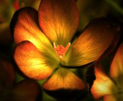Fire-flower ii by etheraiel