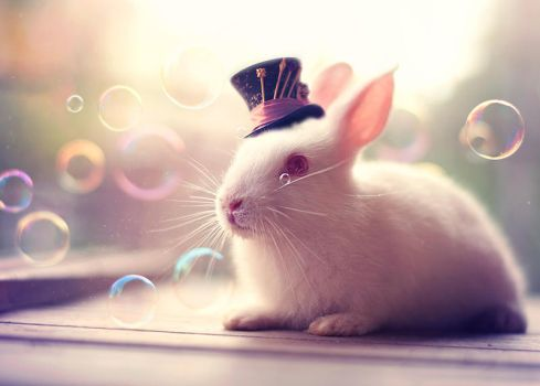 In Wonderland by arefin03
