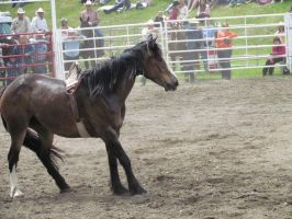 Rodeo Horse Stock 6 by horsecrazycool