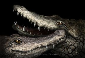 Orinoco crocodiles (Crocodylus intermedius) by NadilynBeato
