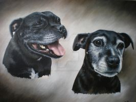 Rigsby and Maisie by petportraitman