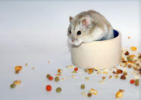 Hamster food by Squadz2000