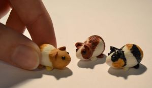 Guinea Pig set 1 by insanable
