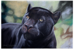 Black Panther - Pastel by BLACKNIGHTINGALE81