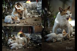 a mother cat trying to rescue her little kitten by iraqson