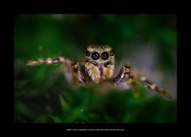 Jumping Spider and Moss by Hector42
