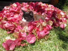 stock kitten in the flowers by Angiepureheart
