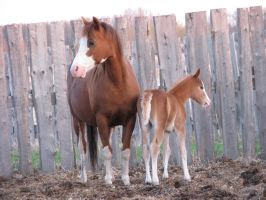 Mare and Foal 11 by okbrightstar-stock