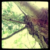 Tree by SophieAnna97
