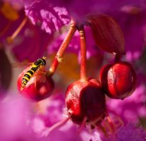 Yellow Abdomen And Red Peas by agaillard