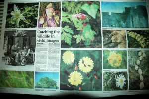 Centre Page Spread by EarthHart