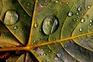 PEARLS OF AUTUMN by ANOZER