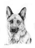 Rhina - German Shepherd by Loukya