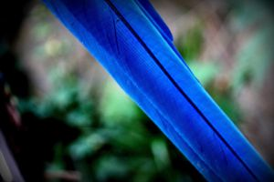 parrot feather by panter-mis