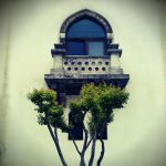 Courting Window by trigovuddthalimund