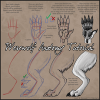 Werewolf Anatomy Tutorial by sugarpoultry