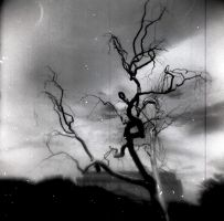 Holga Fun by cenkphoto