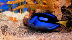 Nemo and Dory by Pi-ray