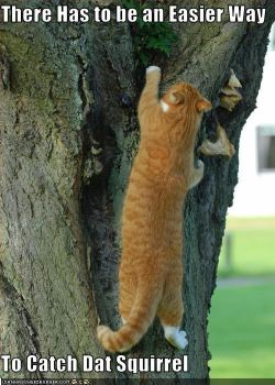 There Has to be an Easier Way To Catch Dat Squirre by SciFiNut2