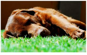 let sleeping dogs lay by discodan