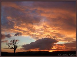 Burning up........Dead Tree 46 by Gwitha-Kathes