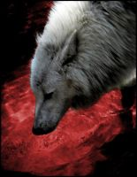 Wolves Blood by GothicAlchemist7X