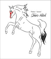 CH Shiro Aitel by Everland-Stables
