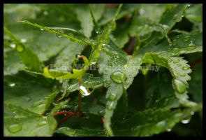 Caught in a Raindrop by LoneWolfPhotography