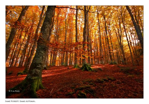 Same Forest, Same Autumn... by Marcello-Paoli