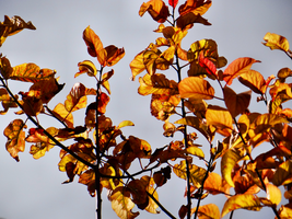 Colours of Autumn -3- by IoannisCleary
