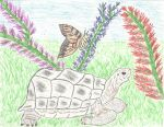 Turtle and Butterfly by LindArtz