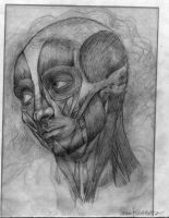 Master Drawing Face Muscles by Newbeing