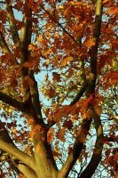 Red Oak At Sydenham Wells by aegiandyad