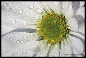 Daisy by DragonInk7