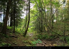 forest 003 by woodlandSTOCK