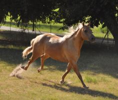 Belle gallop by Feather-Stock
