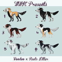 WWK Presents: Voodoo and Rad's Litter Closed by Tree-Branch