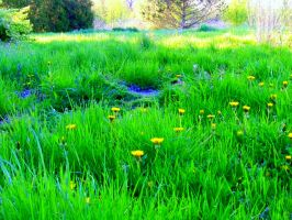Green, Green Grass of Home by MadGardens