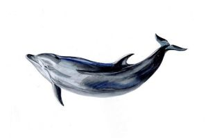 Dolphin by JeyBirn
