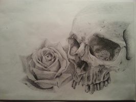 Skull with a rose by GioDonBosco