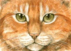 Ginger cat eyes ACEO by Pannya