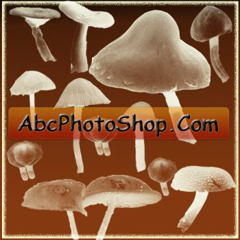 mushrooms brushes by abcphotoshop