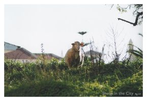 Sheep in the City by LPCD