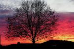 sunset tree by CrisisCorps