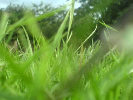 Through The Grass by remota