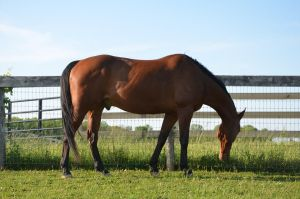 warmblood8 by Spotstock
