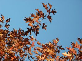 Autumn Leaves by rpalandri