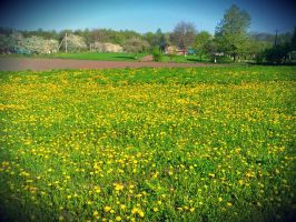 Many many dandelions) by lanamechanic