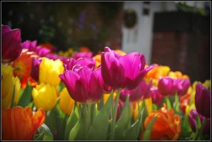 Spring Tulips by SoCallMeNothing